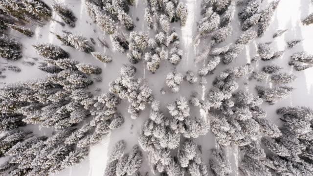 pine trees in winter aerial top down - mountain peak stock videos & royalty-free footage