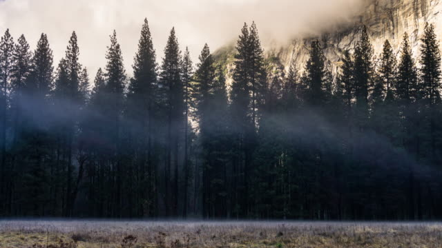 Pine Trees in Yosemite in Winter - Time Lapse