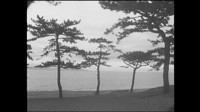 vidéos et rushes de pine trees line the seashore in miho no matsubara in shizuoka city, japan. - rivage
