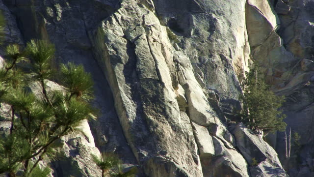 Pine trees on a rock face.