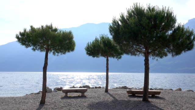 Pine trees on lake shore with benches, Limone sul Garda, Lake Garda, Lombardy, Italy