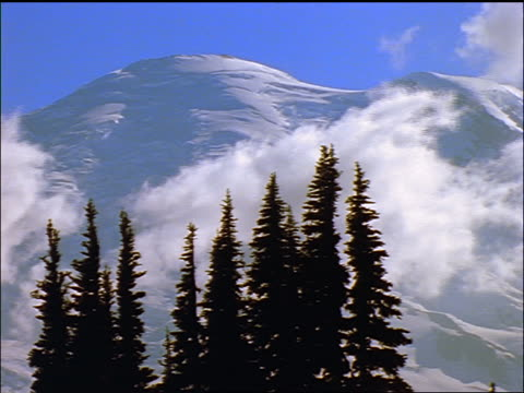 pine trees + time lapse clouds in front of mt rainier / washington - pinacee video stock e b–roll