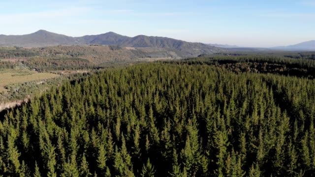 pine woodland - pine woodland stock videos & royalty-free footage