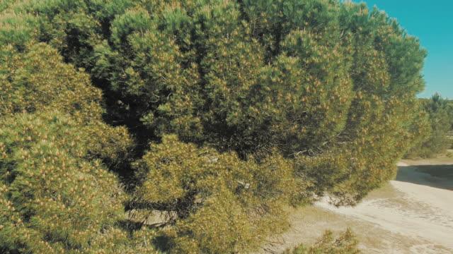 vídeos y material grabado en eventos de stock de bosque de pino - pinar