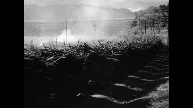 pineapple farm ms work train loaded w/ sugar cane stalks moving through rural area ws train moving fg w/ sugar cane factory bg farming export... - sugar cane stock videos & royalty-free footage