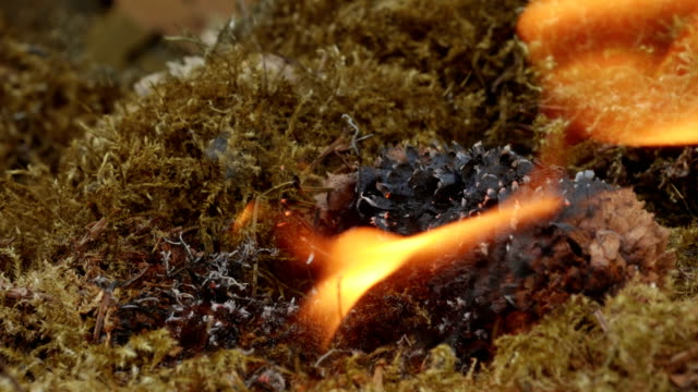 pinecone begins to burn in dry moss - 可燃性点の映像素材/bロール