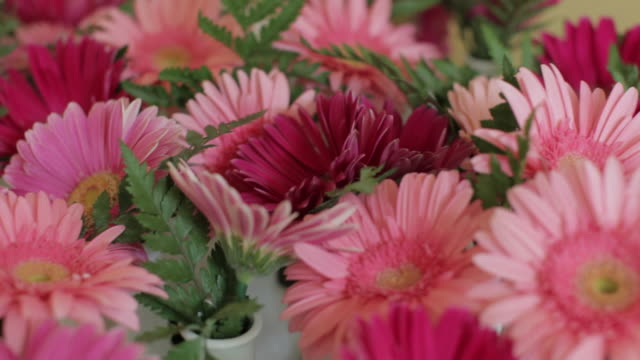 pink and purple flowers - ranunculus stock videos & royalty-free footage