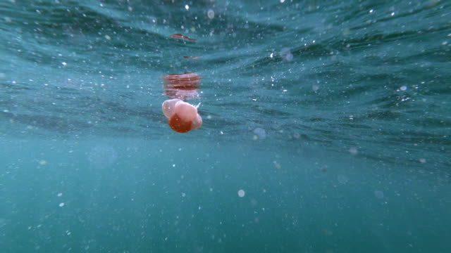 pink blob jellyfish floating near ocean surface - aquatic organism stock videos & royalty-free footage