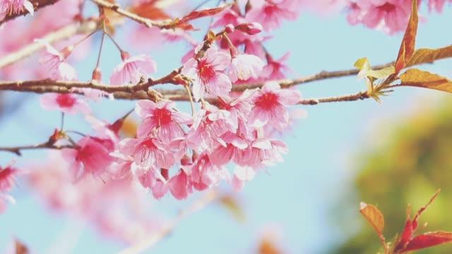 「桜 映像」の画像検索結果