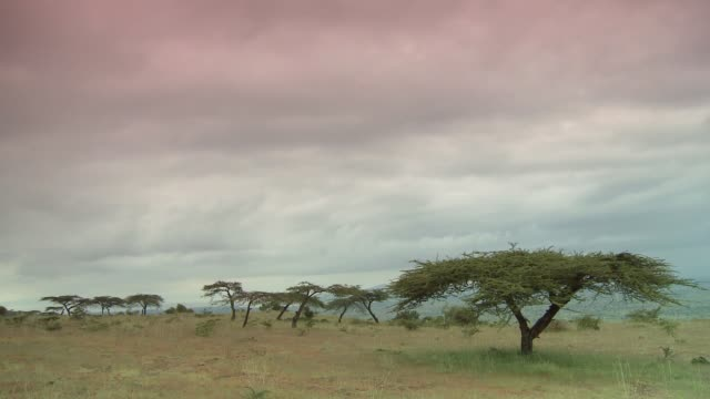 pink clouds drift quickly over the plains of ethiopia. available in hd. - アフリカの角点の映像素材/bロール
