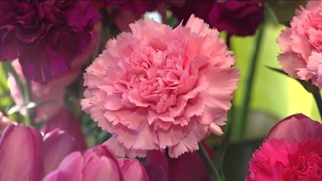 vidéos et rushes de pink cloves - composition florale