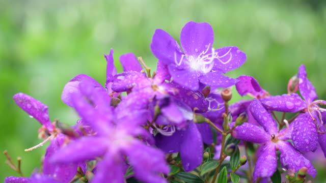 風に揺るぐピンクの花 - purple点の映像素材/bロール