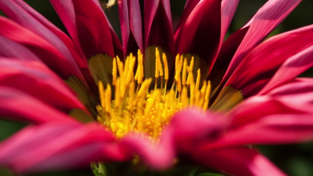 pink flower - blume stock-videos und b-roll-filmmaterial