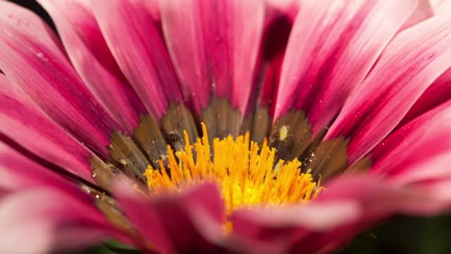 vídeos de stock e filmes b-roll de pink flower - estame
