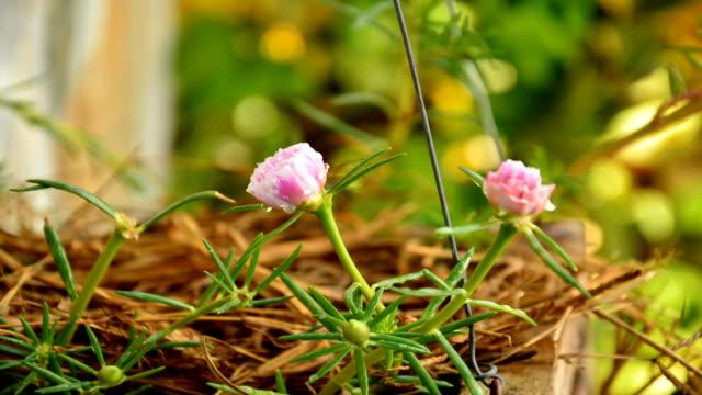 Rosa Blumen in einem Feld