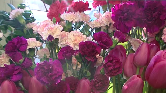 pink flowers - pink colour stock videos & royalty-free footage