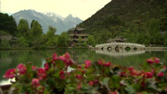 ws r/f pink flowers with lake and pagoda in background, lijiang, yunnan, china - pagoda点の映像素材/bロール