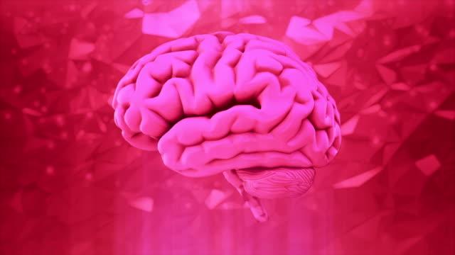 pink human brain - cerebellum stock videos & royalty-free footage