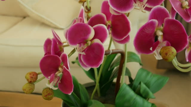 pink orchid decorate in living room - orchid stock videos & royalty-free footage
