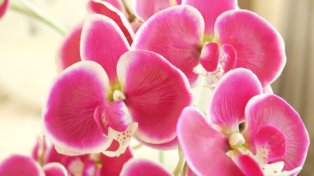 pink orchid decorate in living room