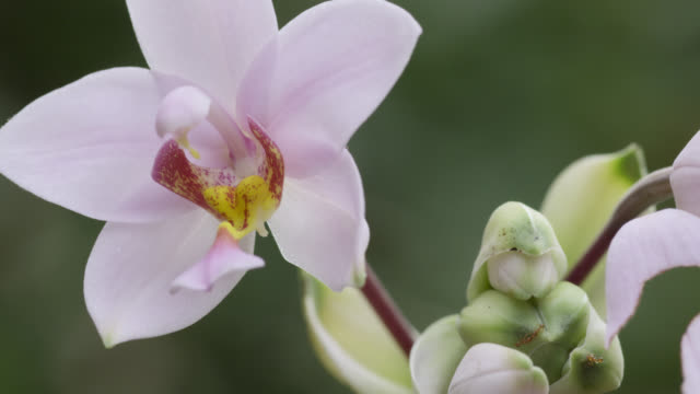 Pink orchid flower in forest