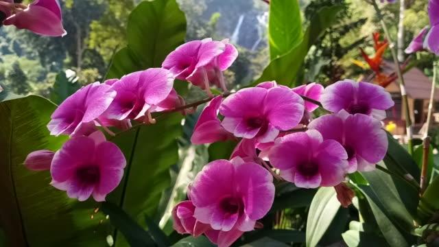 vídeos y material grabado en eventos de stock de rosa orquídea en el jardín - hortensia