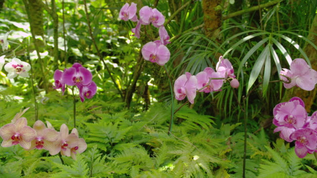 pink orchids bloom in a lush forest. - orchid stock videos & royalty-free footage