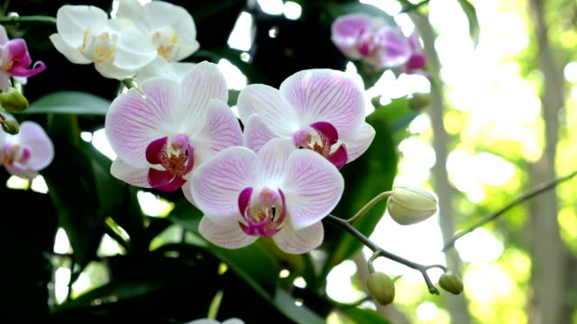 pink orchids flower in garden - orchid stock videos & royalty-free footage