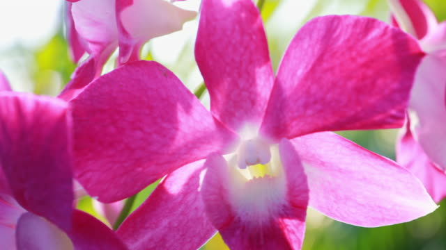 pink orchids flower - orchid stock videos & royalty-free footage
