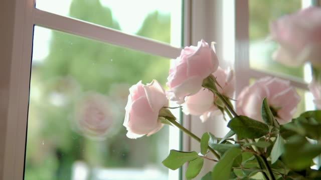 瓶にピンクのバラが入った。 - 花瓶点の映像素材/bロール
