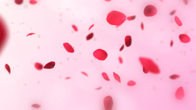 stockvideo's en b-roll-footage met pink rose petals falling. loop. - bloemblaadje