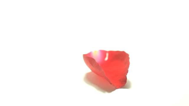 ピンクのバラの花びら落ちる - 花びら点の映像素材/bロール