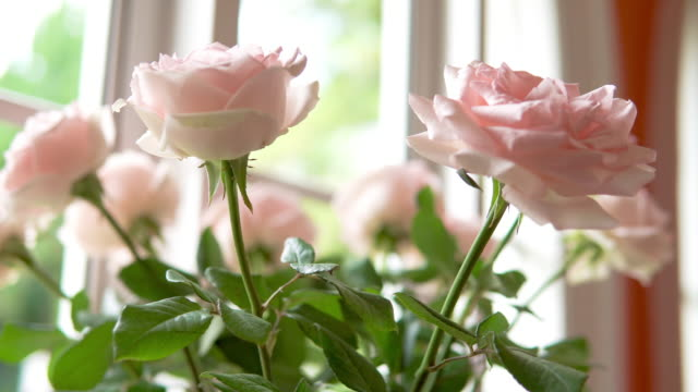 vídeos de stock e filmes b-roll de pink rose. - jarra recipiente