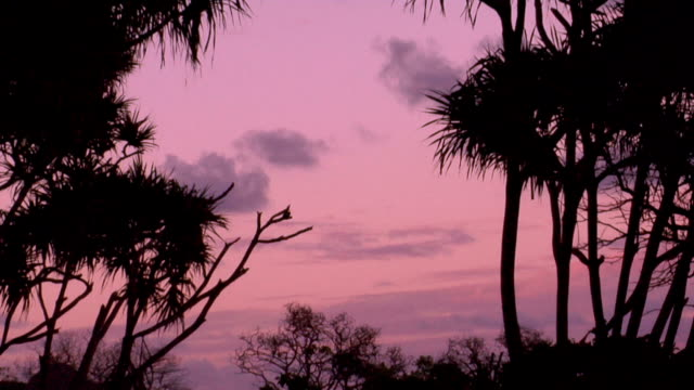 a pink sunset on a tropical isle. - fan palm tree stock videos & royalty-free footage