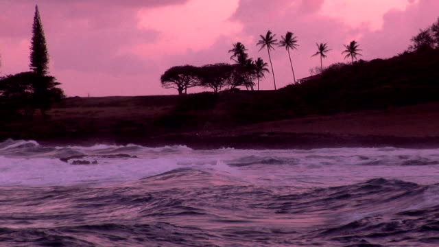 a pink sunset on tropical waters rolling onto a palm-lined beach. - fan palm tree stock videos & royalty-free footage