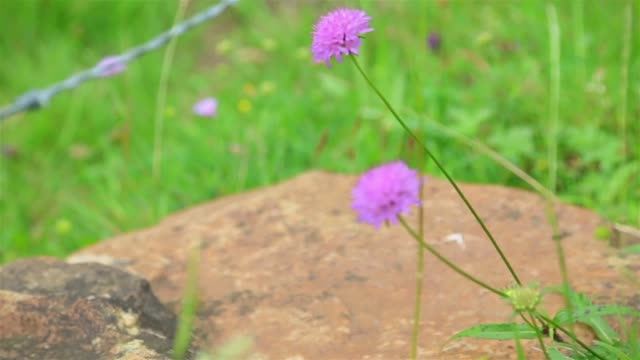 pink wild flower in nature - parque natural stock videos and b-roll footage