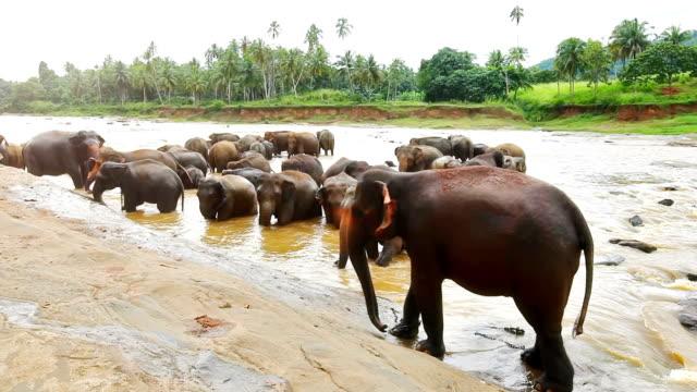 Pinnawela Elephant Orphanage - the Bathing