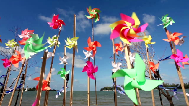 pinwheels on the beach - succulent plant stock videos & royalty-free footage