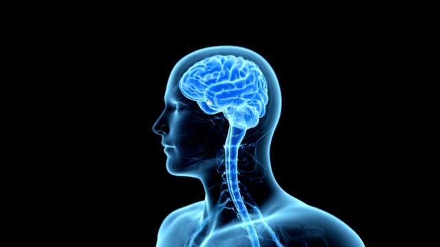 vídeos de stock e filmes b-roll de pituitary gland - glândula pituitária