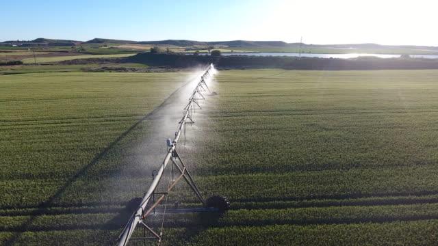 vídeos y material grabado en eventos de stock de metal regando el campo de maíz - equipos de riego