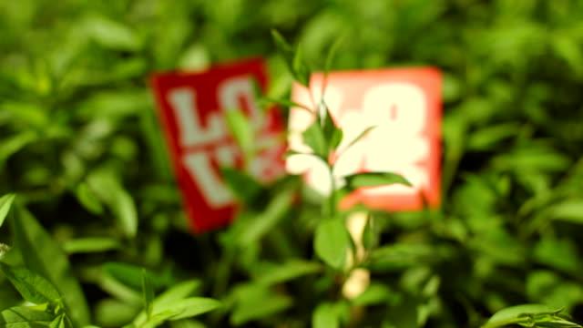 vídeos y material grabado en eventos de stock de cartel con amor inscripción en las plantas - accesorio de cabeza