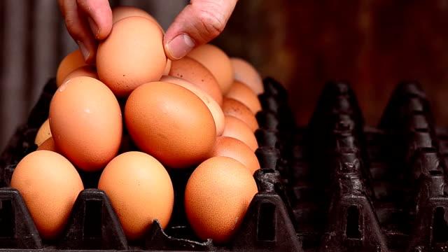 placing egg into a carton
