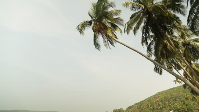 plage de goa en inde - fan palm tree stock videos & royalty-free footage