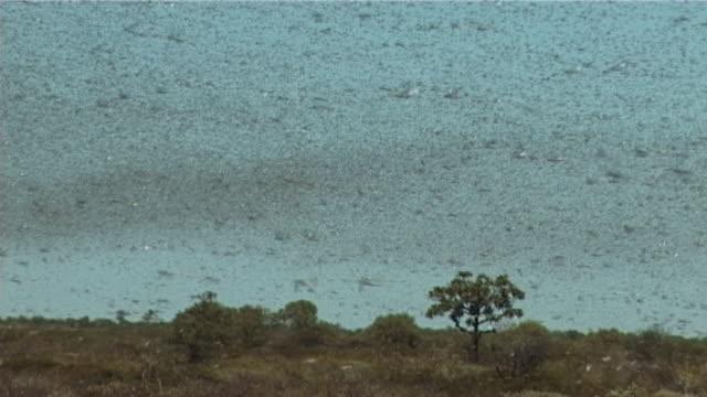 ペストイナゴ - 虫の群れ点の映像素材/bロール