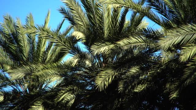 vídeos de stock e filmes b-roll de plan trees blowing in the breeze - folha de palmeira
