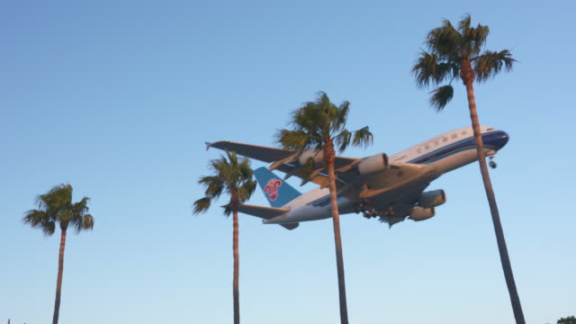 planes & palms - palm tree stock videos & royalty-free footage