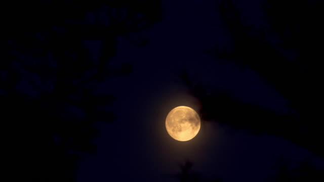 planetare Mond