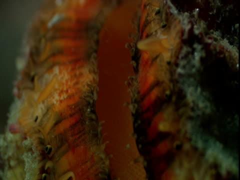 Plankton drift past a scallop filter feeding.