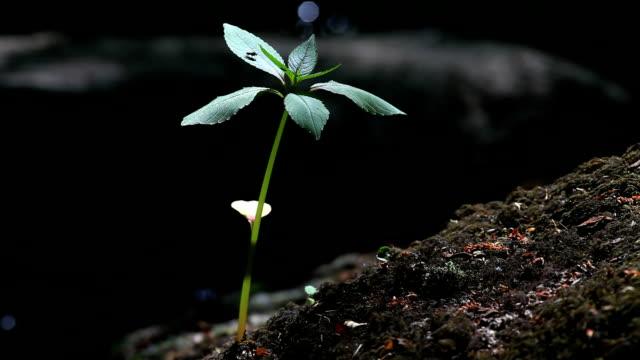 vídeos de stock, filmes e b-roll de planta acima da floresta creek - floresta da bavária