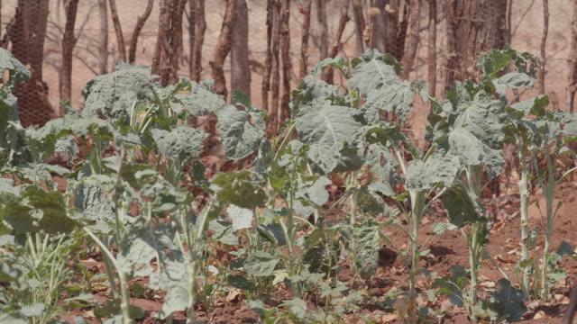 vidéos et rushes de plant / africa - plaque de montage fixe